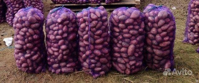 Продаю и доставляю картофель. Красноярский край,  Красноярск