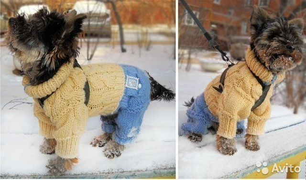 Мастер класс по одежде для собак