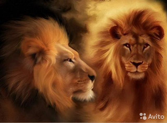 Do You Know How to Say Lion in Different Languages