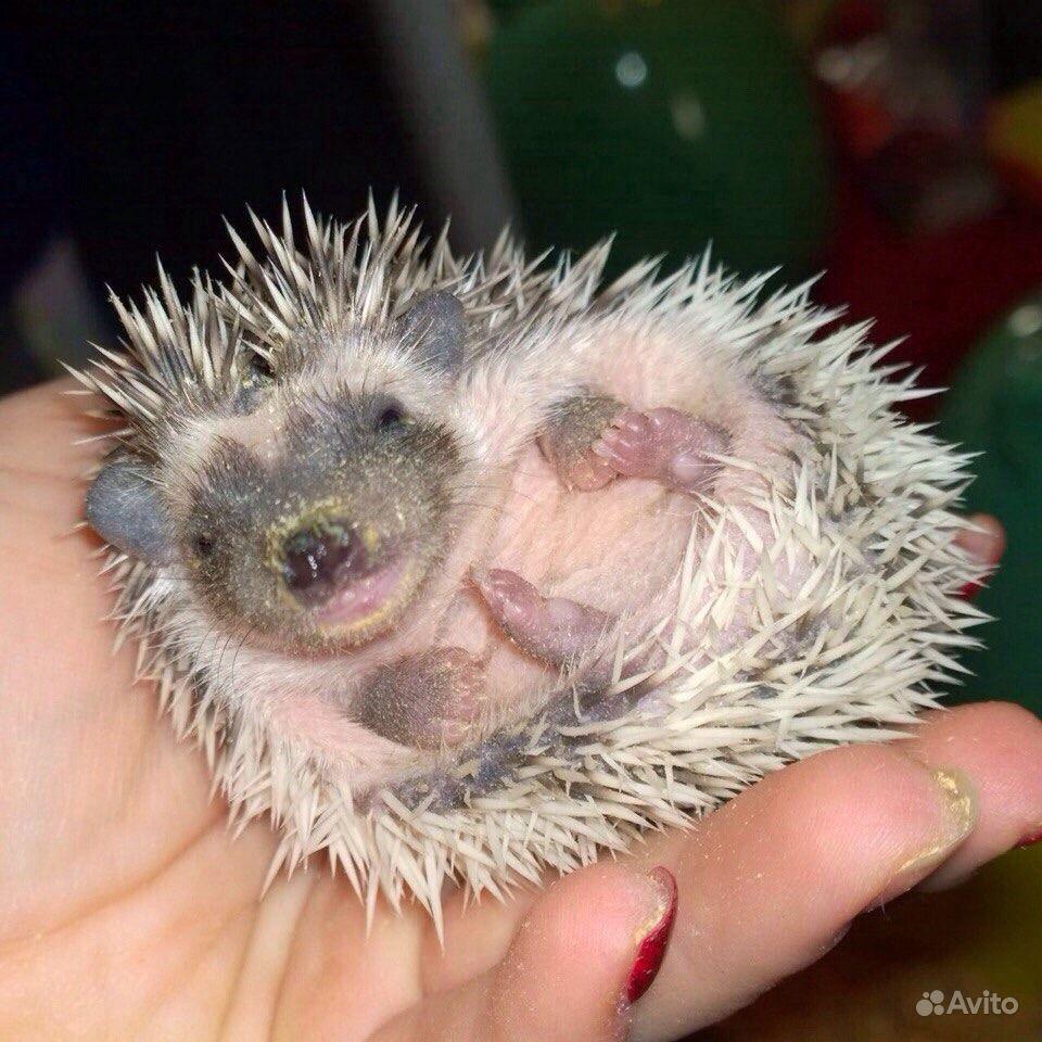 Животные - купить домашних и - Avito ru