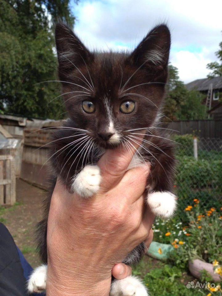 Котенок (мальчик, 2 месяца) в дар