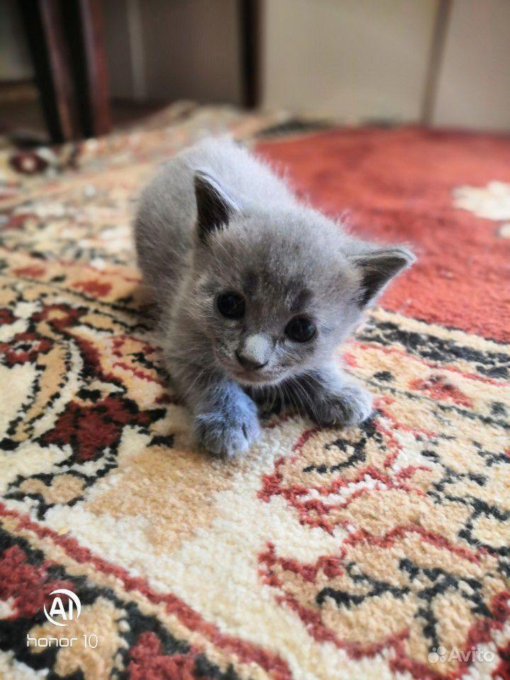 Котята ищют дом
