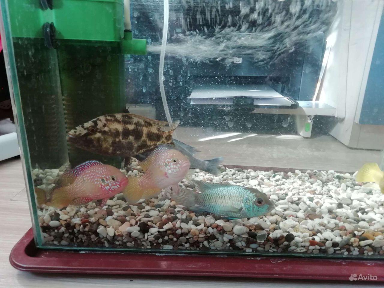 Рыбки купить на Зозу.ру - фотография № 3