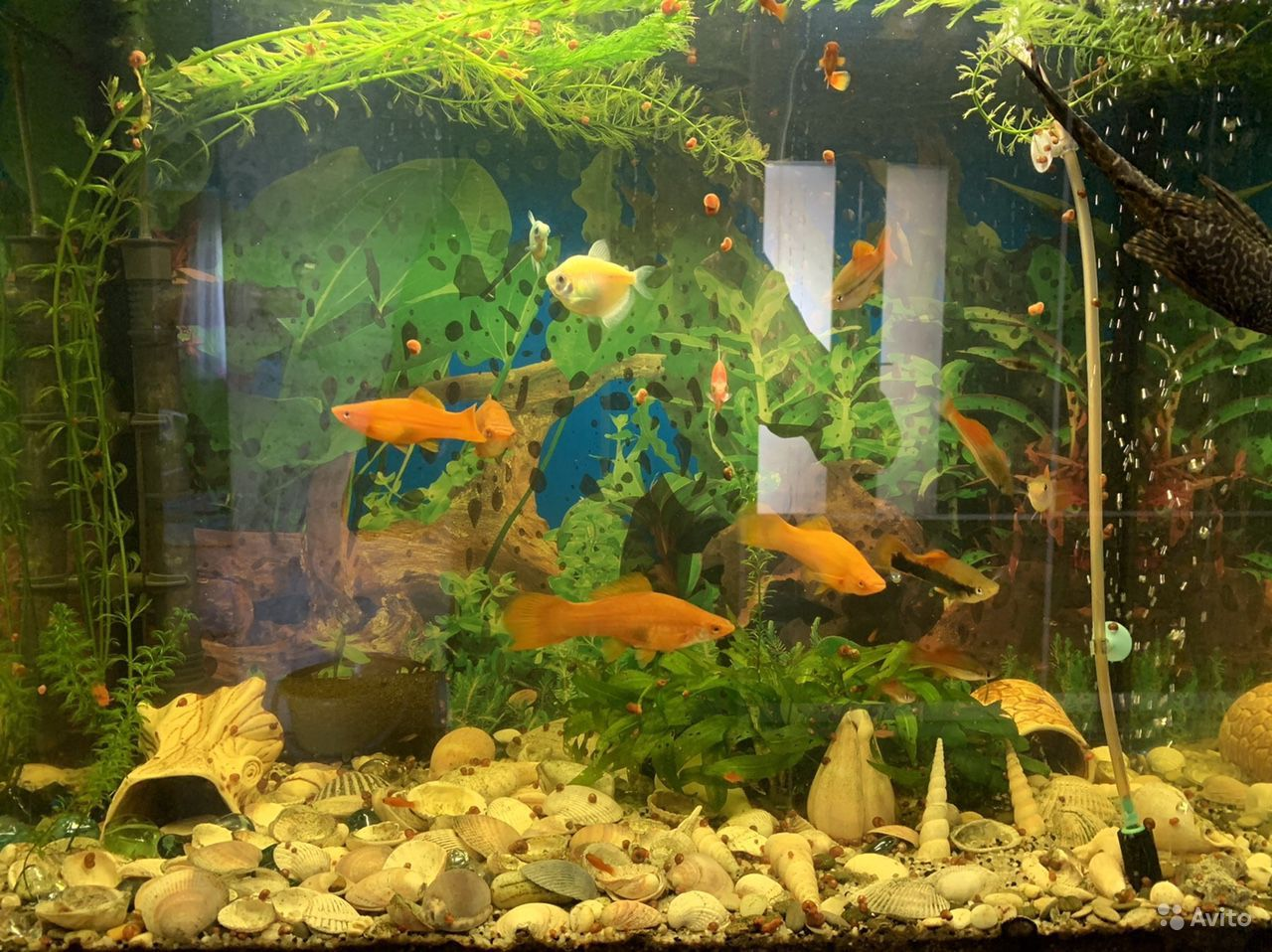 Аквариум с рыбками на тумбе купить на Зозу.ру - фотография № 1