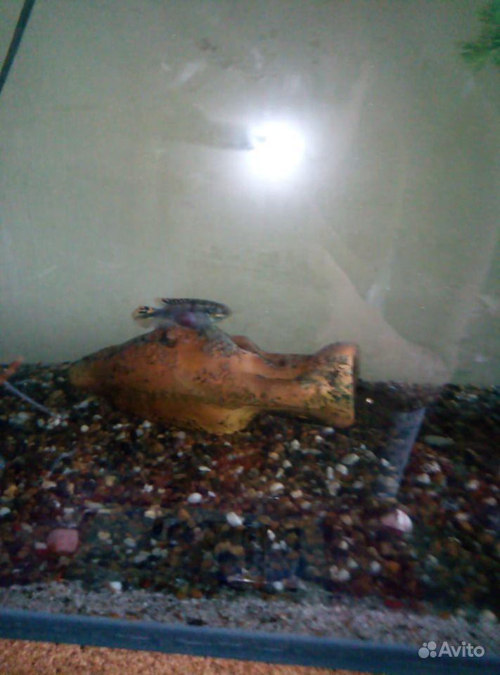 Рыба купить на Зозу.ру - фотография № 4