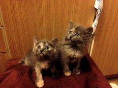 Уфа авито кошки бесплатное объявление авто бу частные объявления в санкт петербурге