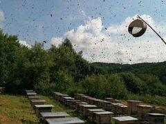 Продам пчелопакеты, рамки дадан 1мед+3 расплода
