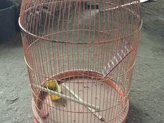 Клетка для птиц(попугаев)