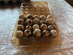 Перепелиные яйца (инкубационные)