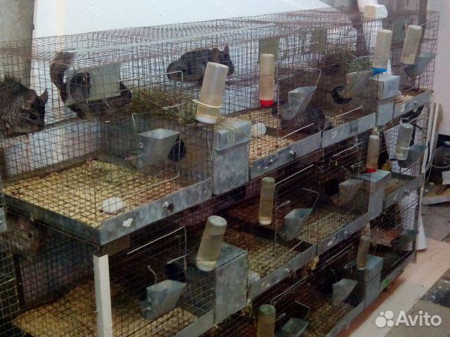 Корма для собак и кошек - купить клетки, домики - Avito ru