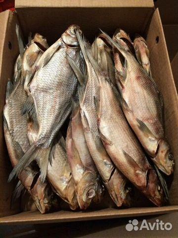 погода получай грядущее во  сызрани бери  3 дня жор рыбы