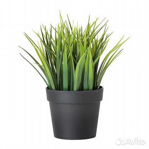 одна важнейших купить растения на авито москва ПОЯВИЛАСЬ ТАКАЯ