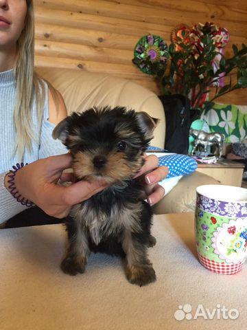 Милые щеночки купить на Зозу.ру - фотография № 5