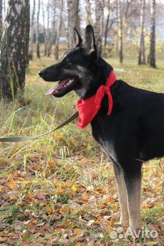 Собака Макс в дар купить на Зозу.ру - фотография № 4