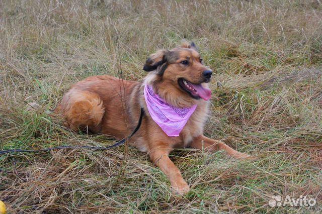 Собака в дар для семьи купить на Зозу.ру - фотография № 7
