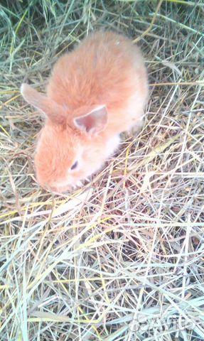Продам месячных крольчат 89082951331 купить 1