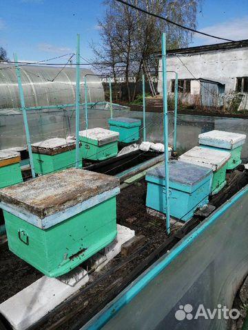Пасека, ульи, пчелы (9 семей) 89220008190 купить 2