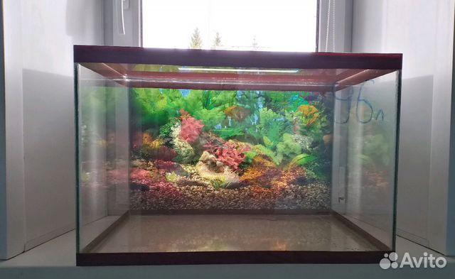 Aquarium 89103112387 buy 7
