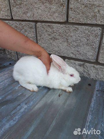 Кролик  89277704326 купить 3