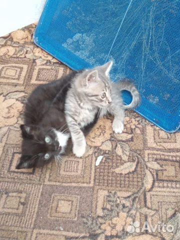 Кошка 89606708188 купить 3