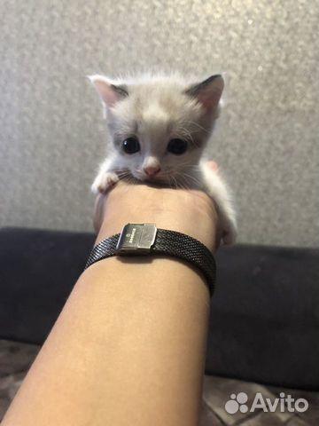 Котята  89143852595 купить 1