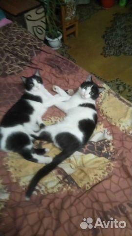 Кошечка с котиком мышеловы  89501307486 купить 2