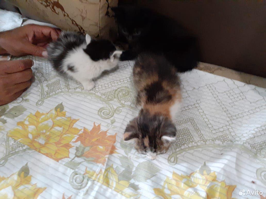 Котята в очень добрые руки  89132306598 купить 1