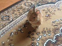 Декоротивный кролик ищет подружку
