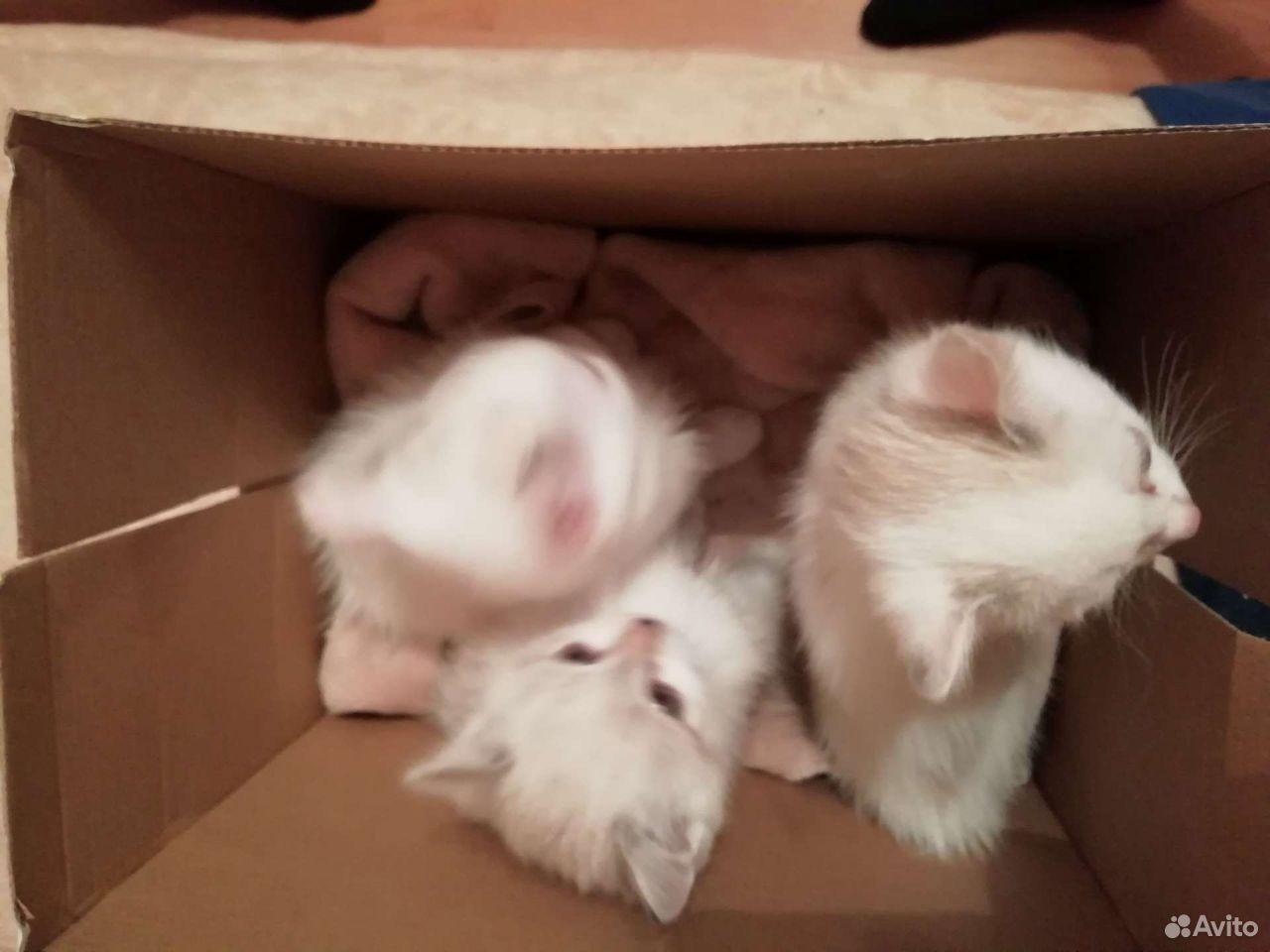 Cat  89000569955 buy 5