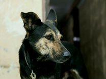 В добрые руки — Собаки в Геленджике