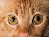 Отдам в добрые руки красивого рыжего кота