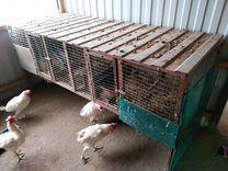 Клетки для кролоков