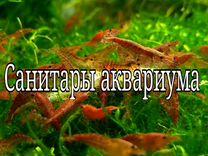 Креветки Черри