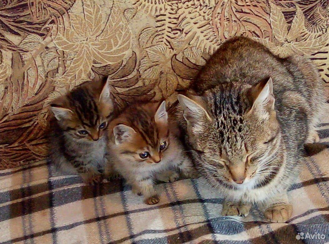 Котята мальчик и девочка  89965001605 купить 4