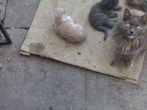Отдаём котят в добрые руки