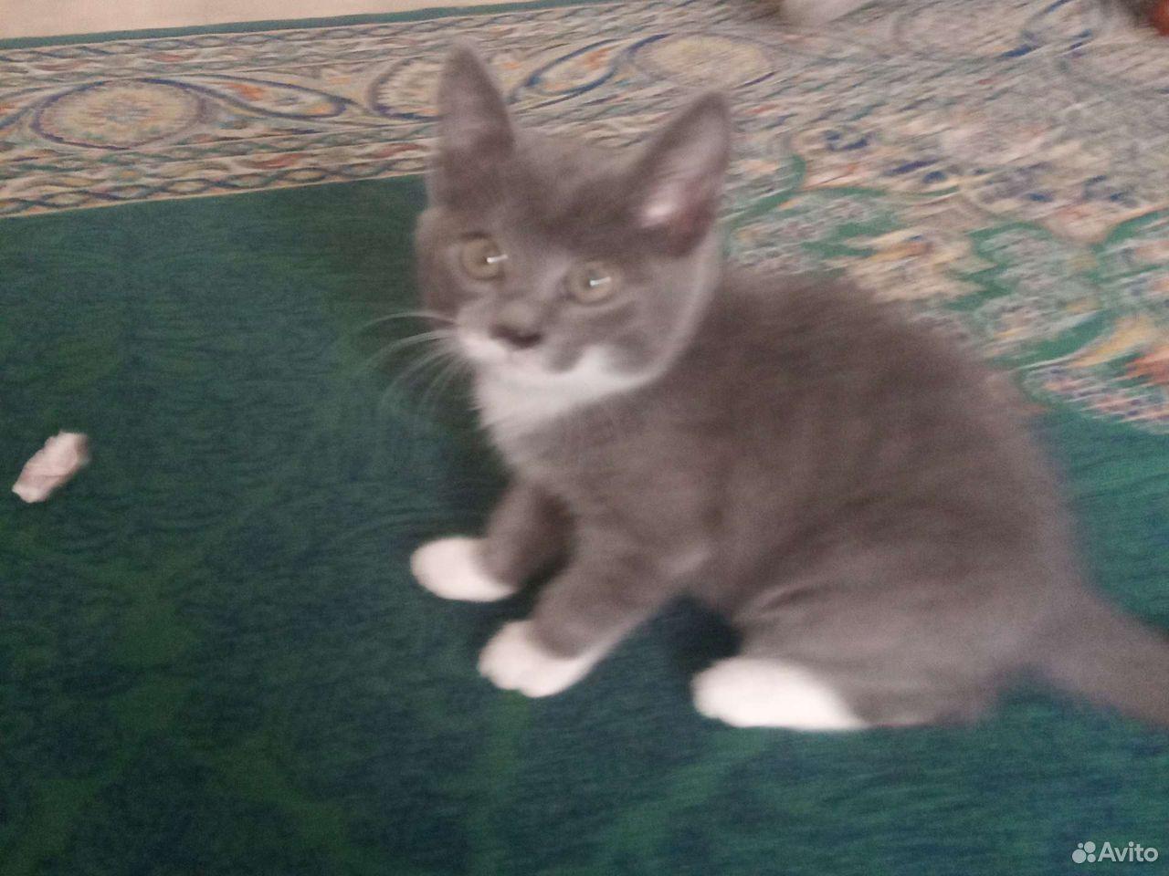 Котенок 2месяца