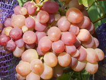 Саженцы винограда разного возраста