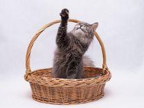 Красивый кот ищет дом
