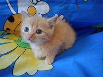Мальчик 1,5 месяцев