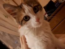 Кошечку в добрые руки — Кошки в Геленджике