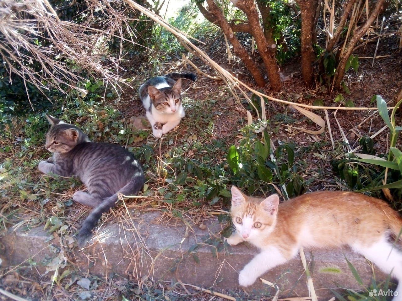 Давайте спасем котят с улицы Подарите дом малышу
