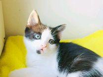 Котенок мальчик 1,5 мес