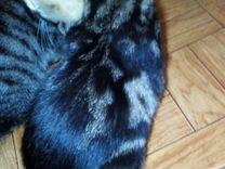 Отдаю котят в хорошие руки — Кошки в Геленджике