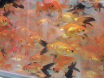Огромный выбор рыбы