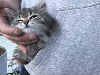 Котёнок в добрые руки (девочка)